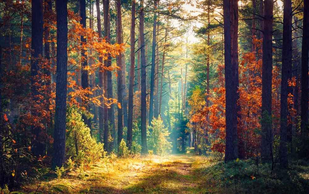 عکس منظره از جنگل پاییزی